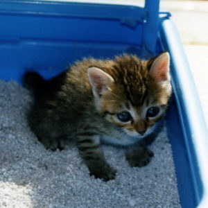 toilet-cat