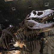 ティラノサウルスの化石です